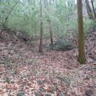 堀底道から外れて藪内で見つけた堀