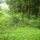 雑草に囲まれてますが、真ん中に堀があります