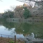 桜堀と本丸の石垣。