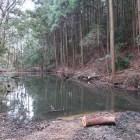二ノ門脇の水堀。水堀に覆い被さる木の伐採作業中でした