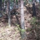 堀切の向こうの切岸には石積みされている所も。