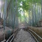 竹林の中の横堀