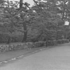 ⑦三の丸北、多聞塀跡。昭和57年撮影。見にくいですが松の向こう側には着見櫓が見えています。