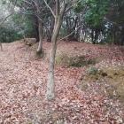 高木大山付城の土塁