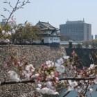 坤櫓跡から桜越しに千貫櫓を望む