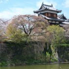 五軒屋敷堀越しの追手東隅櫓としだれ糸桜