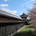 追手東隅櫓から続く多聞櫓と桜