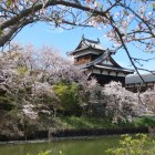 桜越しの追手向櫓