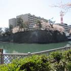 福井神社前から見た水堀と石垣