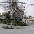 高槻城解説版とその上に満開の桜