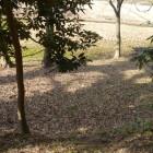 牛久城最下層の帯曲輪・・・すぐそこには田んぼが見えます