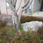 高槻城枡形門の石垣石跡