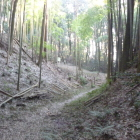 竹林に隣接する主郭