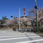 桜満開の福井城・福井県庁