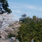 南西から見た天守と桜