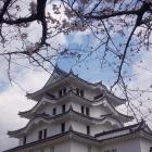桜も咲き始めておりまする。