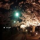 三の丸広場の夜桜。うーん、上手く撮れない…