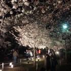 三の丸広場の夜桜。言うまでもなく凄い賑わい。