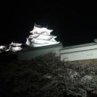 天守夜景。白く輝いとります。