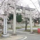 石碑と鳥居と桜。