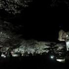 本丸跡、夜桜の一景。