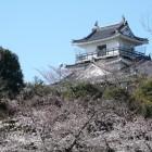 桜に浮ぶ天守閣