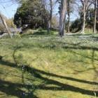 鹿島神社曲輪北面土塁左側