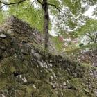 苔むす石垣が良いですね