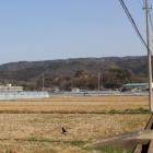 城址遠景。手前の低い山が韮山城。