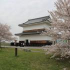 蟠龍(ばんりゅう)櫓と桜