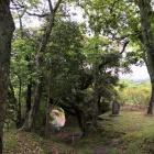 自然の木が作ったトンネル