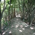 土橋状の尾根道