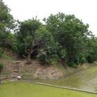 信用金庫駐車場から見た太田城水攻め堤