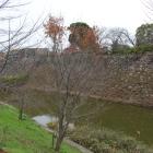本丸西面の堀と石垣