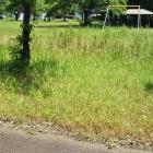 草が茂ってブランコまでも行けません。