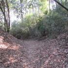 神社裏手にある堀底道は先程の道につながってます