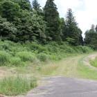夏草樹木に覆われてる東面城塁、土塁と横堀