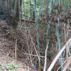 竹藪の向こうに空堀