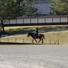 城跡を散歩していた日本在来馬っぽい馬