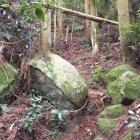 ワイルドな登城路、木段はありますが