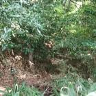 本堂裏の空堀と土塁、薮ですけど
