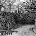 ⑨桝形の石垣上には桜の木が沢山植えられていました