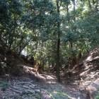 佐保山南陵と東陵の間の堀切