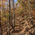 紅葉の登城路