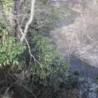 東方面鮎川の崖淵