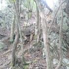 本丸西側尾根の粘板岩珪岩互層露頭
