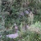 二の丸埋門