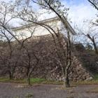 多聞櫓と本丸石垣