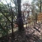 馬場跡の逆茂木と馬防柵