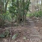 石積跡残る登城路